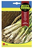 Semillas Fitó 46 - Semillas de Cebolla Blanca Grande País