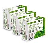 NATURE ESSENTIAL   Centella asiática (complex) 2500 mg 60 Cápsulas vegetales con castaño de indias, vid roja, ginkgo Biloba y Vitamina B-6. (Pack 3 Unid.)